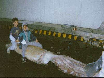 ¿Cuánto pesan los calamares gigantes?